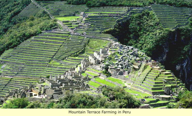 What specific farming and building techniques did the incas use?