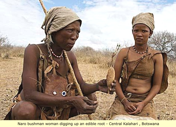 history of the san people in San tribe of south africa, a way of life perfected the descendants of those who lived more than 20000 years ago in what is now south africa and who are believed to be the original human inhabitants of sub-saharan africa is known as the san people.