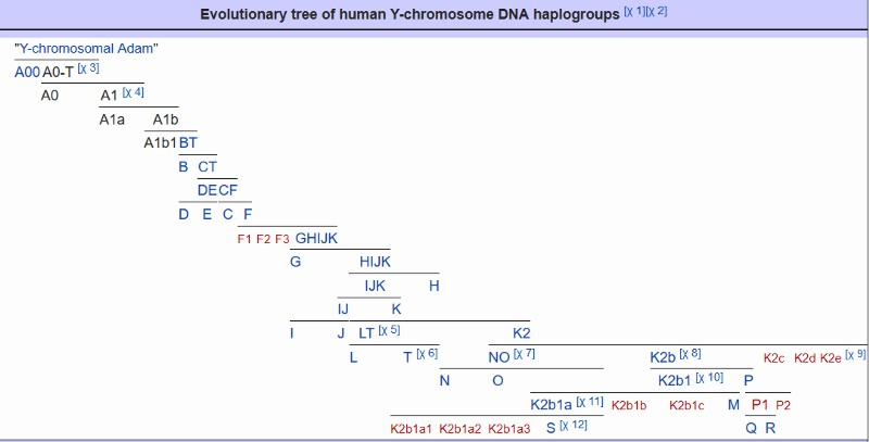 Defining the Arabs - Genetically and Phenotypically